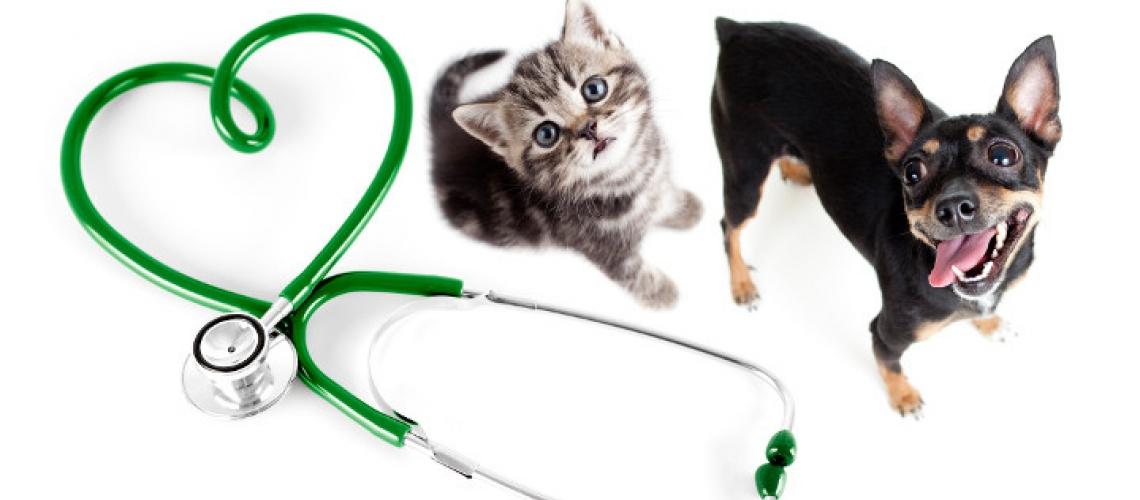 Clínica veterinària