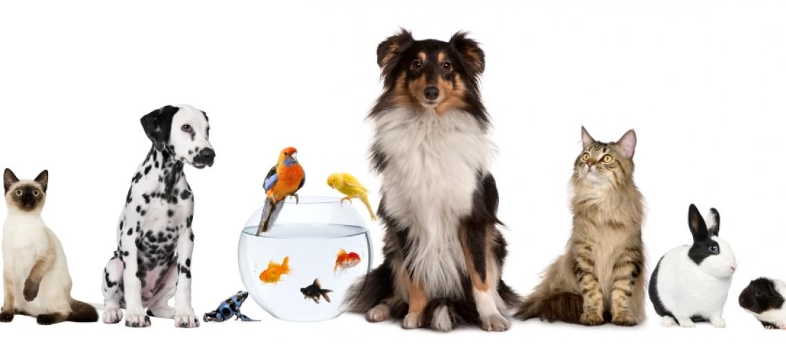 Especialitats veterinàries