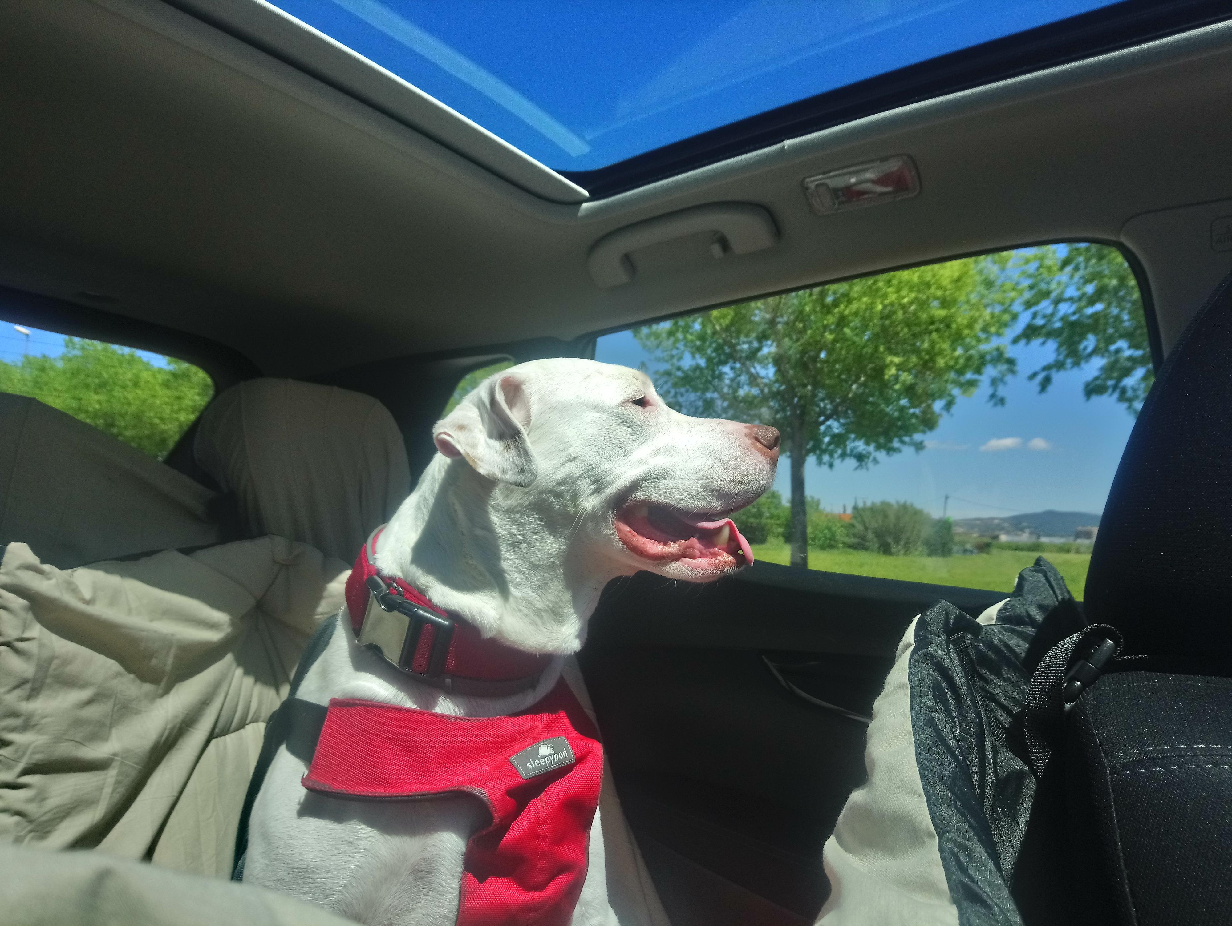 Viatjar amb mascotes en cotxe