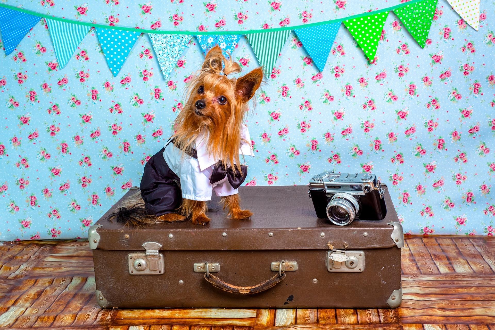 Com preparar un viatge amb mascotes a fora de la Unió Europea?