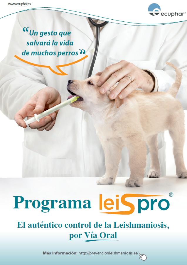 Infecció per Leishmània - Prevenció de la Leishmaniosi
