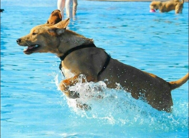 Aquest és en Bob en plena forma passant-s'ho pipa a la piscina!