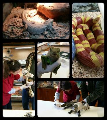 Avui l'Anna (Veterinaria) i la Sílvia (ATV), han anat a fer la revisió a una sèrie d'animals d'allò més peculiars!