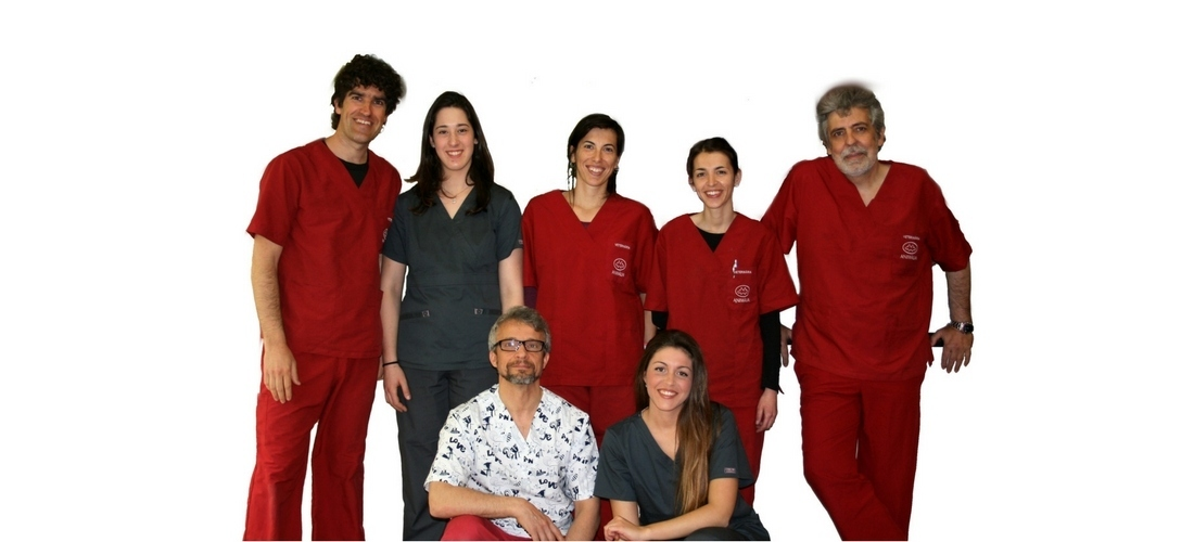 Som un equip de veterinaris, auxiliars veterinaris... especialistes en animals de companyia
