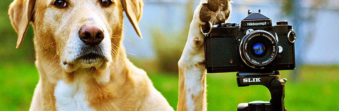 Concurs de fotografia d'estiu!