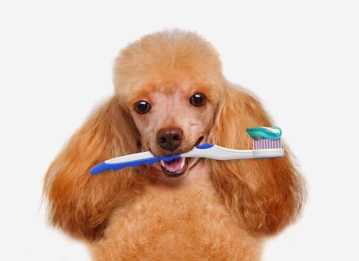 ¿Sabies que la malaltia periodontal és un dels problemes de salut més comuns en els gossos? i que els gats també la poden patir?