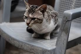 Qüestionari de disfunció cognitiva en gats